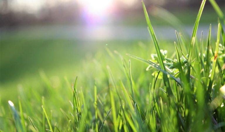 Tipps zur Rasenpflege – Anpflanzen