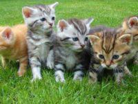 Katzenbabys erziehen