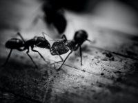 Vorsicht Ameisen