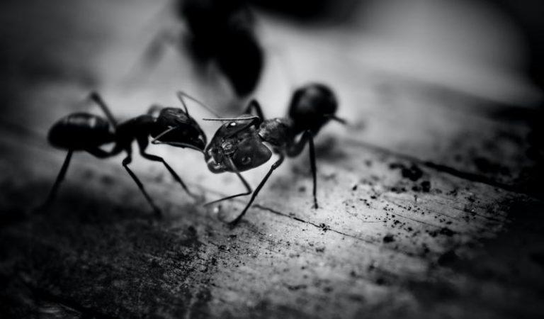 Ameisen bekämpfen Teil 2