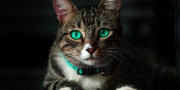 Katzenhalsband kaufen
