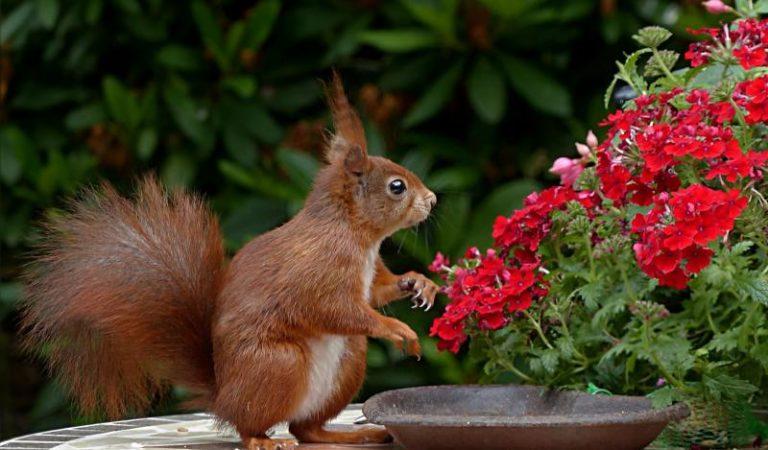 Blumenkübel aus Edelstahl – Die Alternative