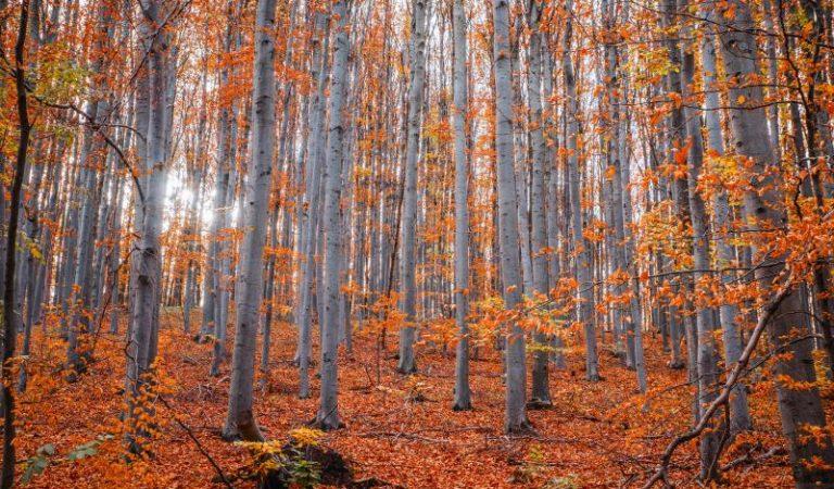 Blühende Herbstträume im Garten