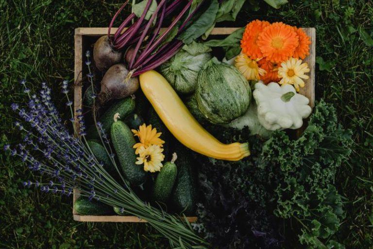 Tipps und Tricks zum Gemüsebeet