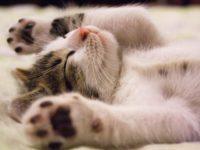 Katzenbabys Tipps und tricks